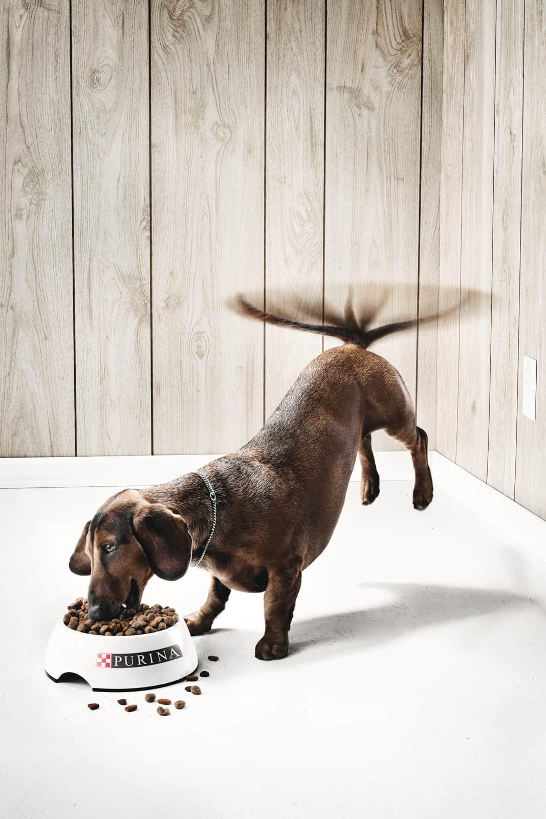 Purina : chien heureux