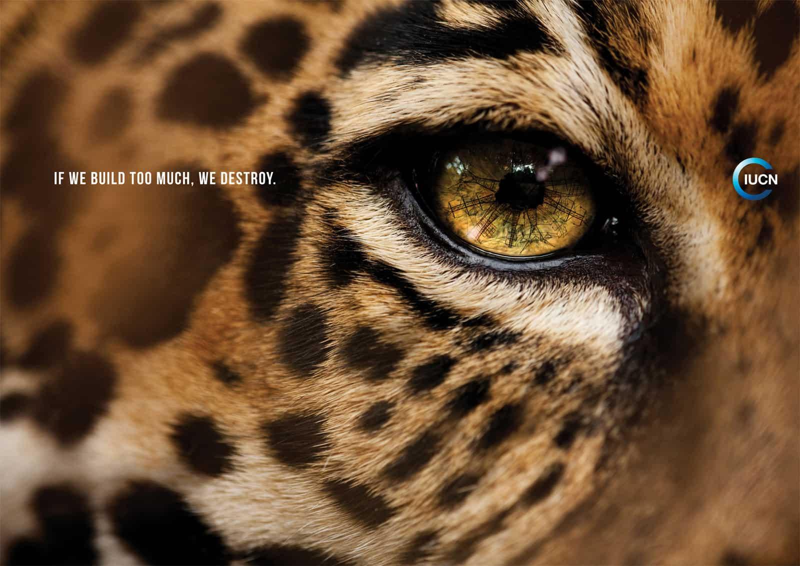 Pub IUCN : Jaguar