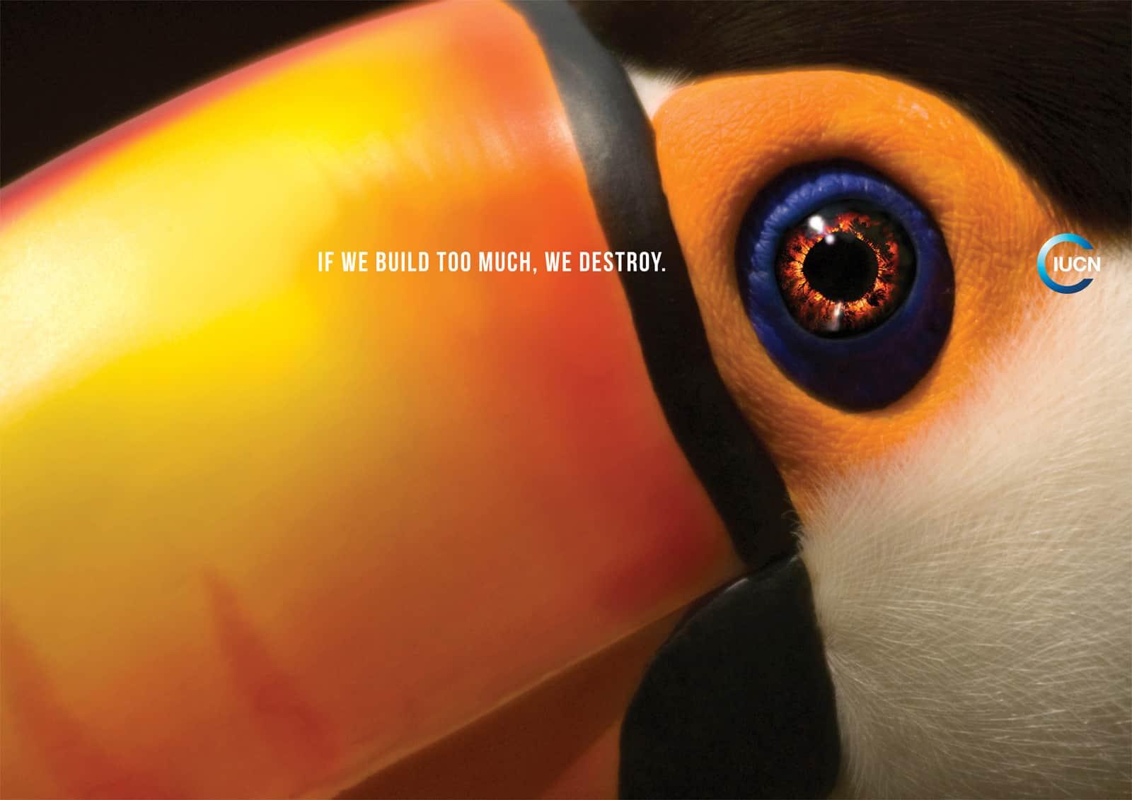 Pub IUCN : Toucan