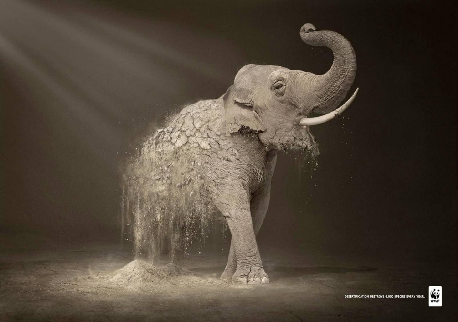 Pub WWF désertification : élephant