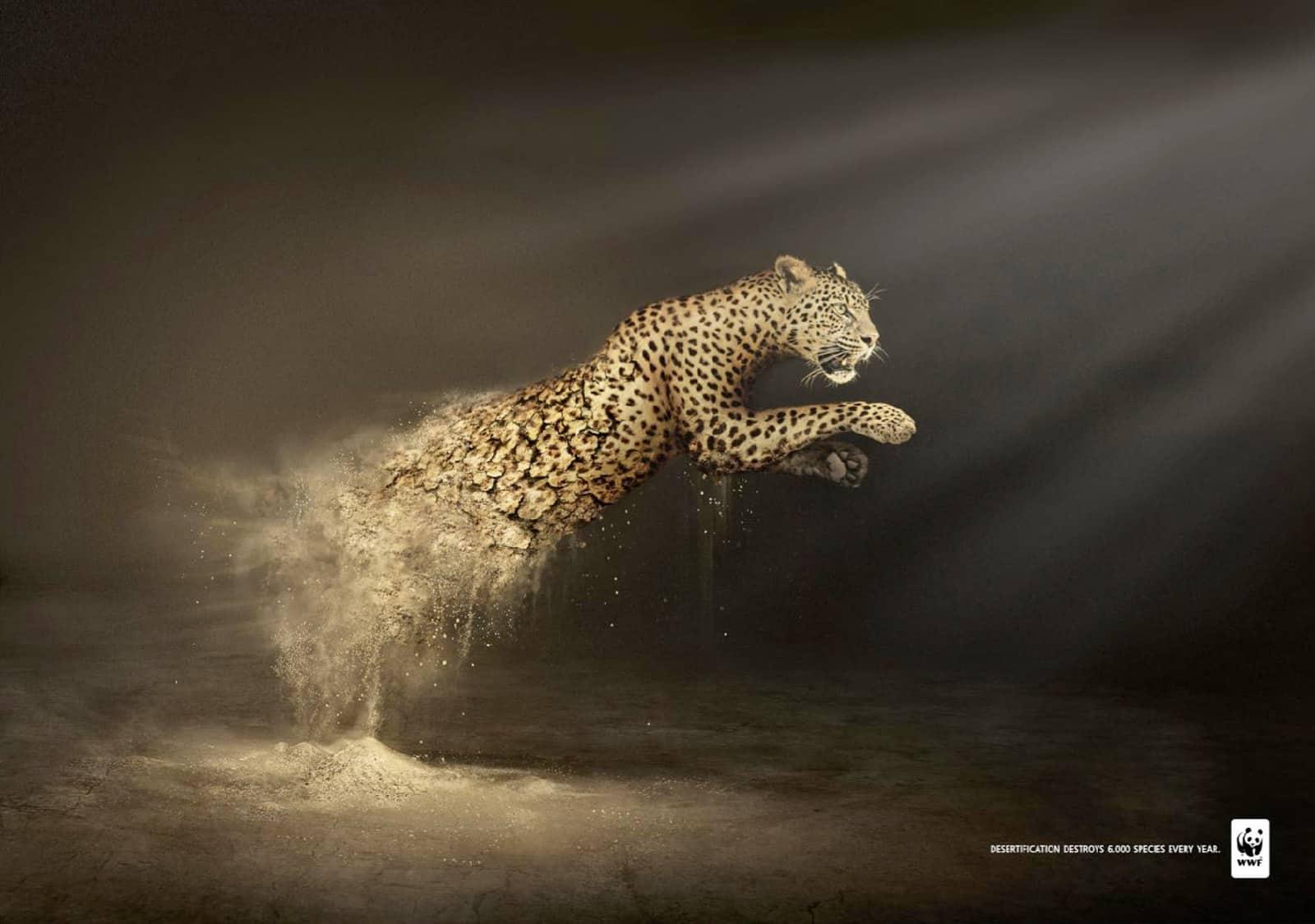 Pub WWF désertification : léopard