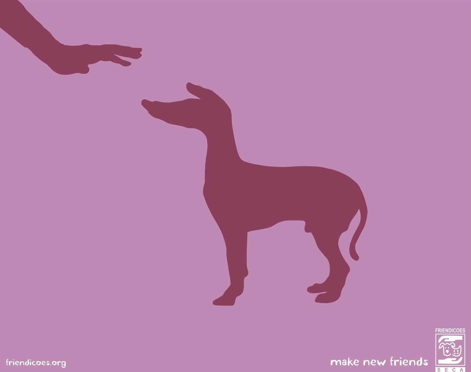 Pub-Friendicoes-chien