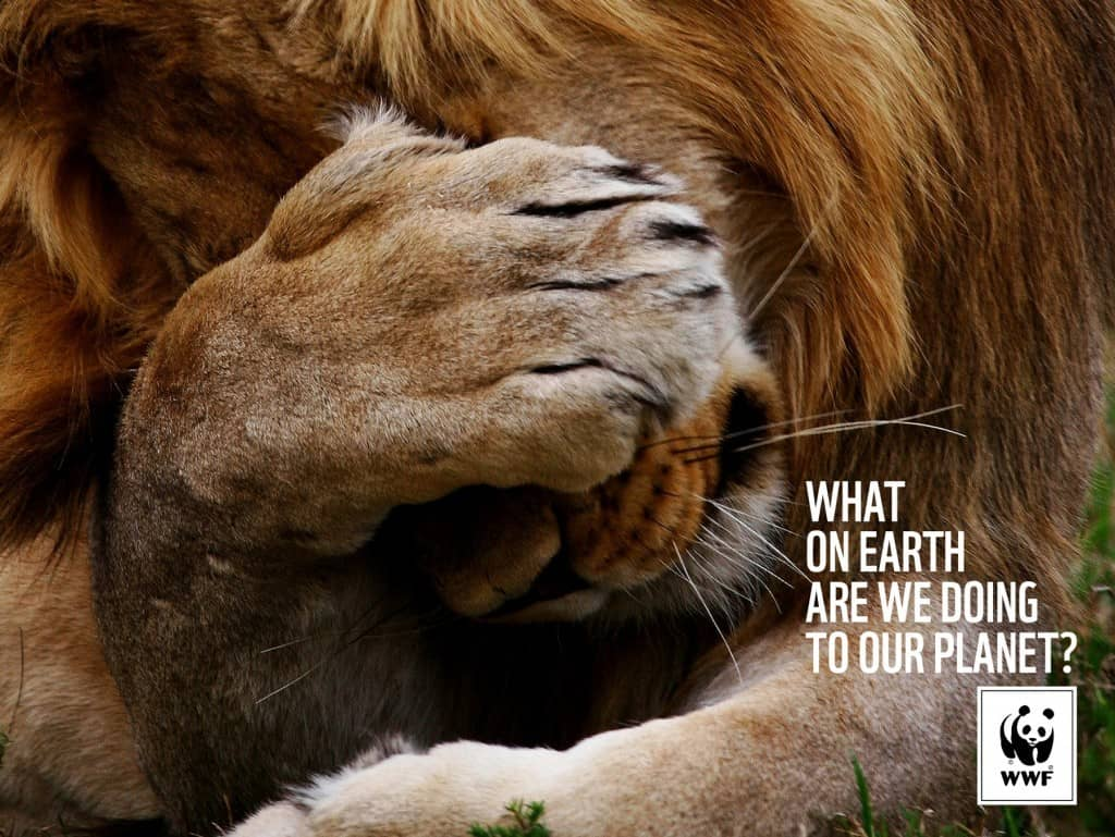 Pub WWF : lion