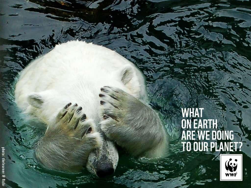 Pub WWF : ours polaire