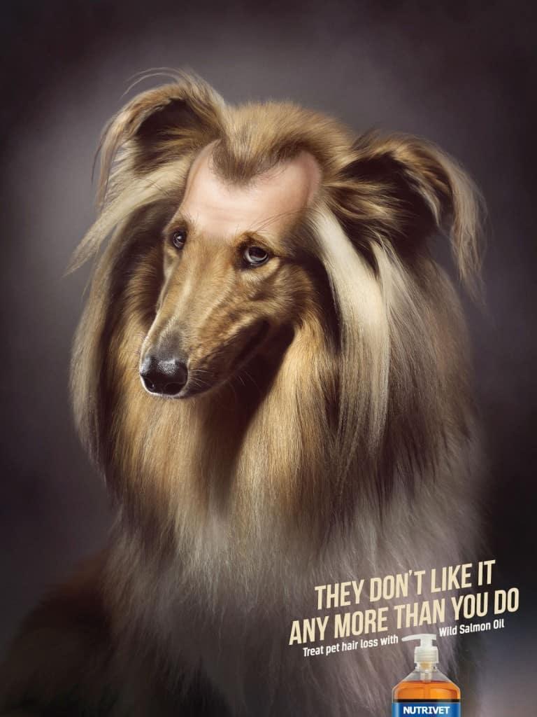 Pub Nutrivet : chien